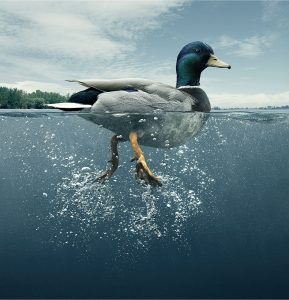 How To Be Successful Real Estate Agent with No Experience Real Estate School Get Your Real Estate License Act Like a Duck 2